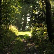 Kräuterparadies umgeben von Wald und Wiese